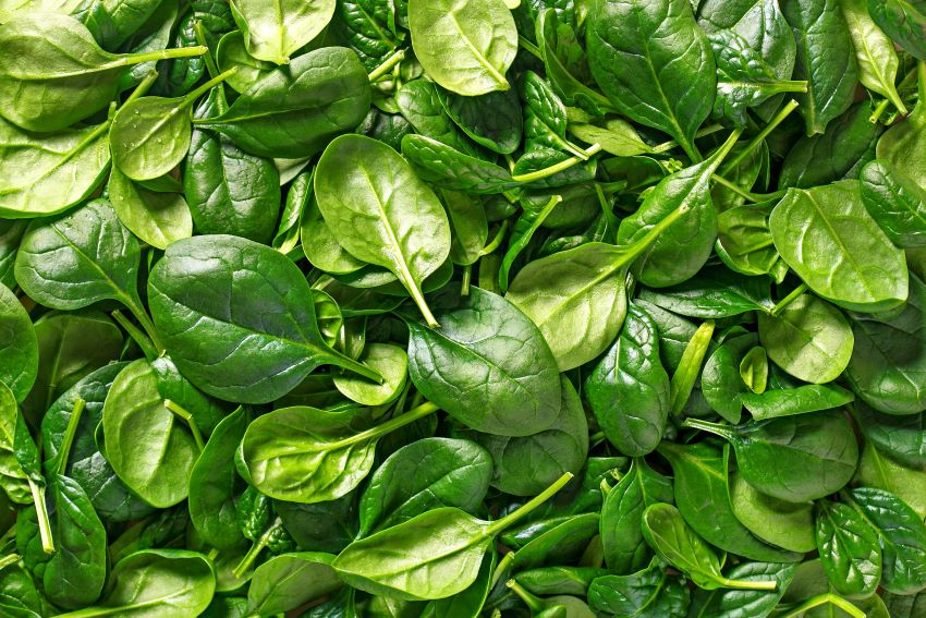 What Green Means for Restaurants